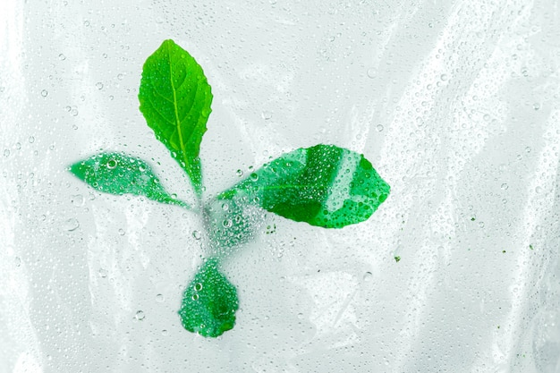 Trees growing by seedlings in plastic bag with water drops and dew background