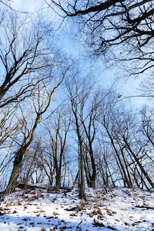 Trees growing in a forest in winter. on the ground is white snow. photo close-up in sunny weather