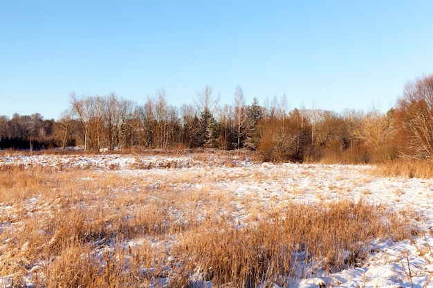 冬の森に生えている木々、地面には白い雪の晴天