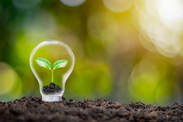 친환경 전구에서 자라는 나무와 흐린 녹색 자연 배경 에너지 절약 및 환경 보호 개념.
