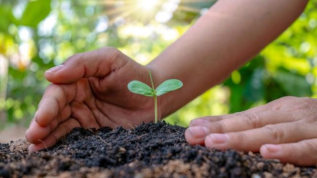 土の中で育つ木と人の手で木を世話するアースデイのコンセプトと地球温暖化キャンペーン