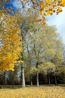 Деревья, растущие в городском парке