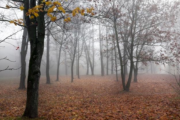 숲에서 자라며 가을 시즌에 촬영 된 나무들. 아침, 공원의 안개