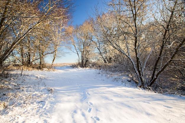 Деревья, растущие в лесу зимой