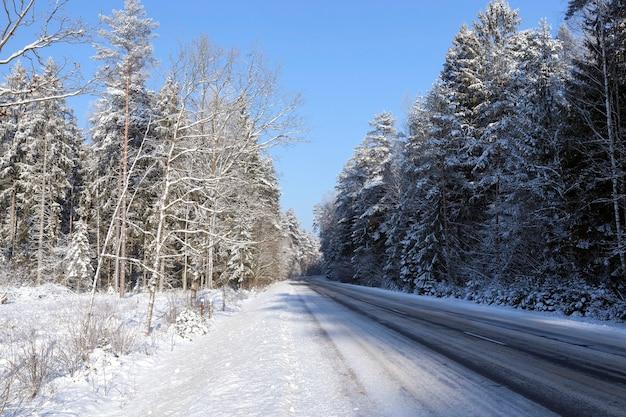 森に生えている木々。降雪後の冬季に撮影。地面には雪の吹きだまりと青い空があります