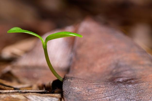 自然の森で育つ木