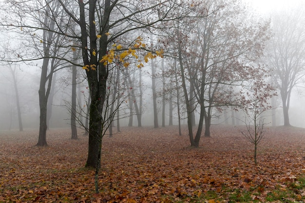Деревья, растущие в парке в осенний сезон. мрачные однообразные леса фото