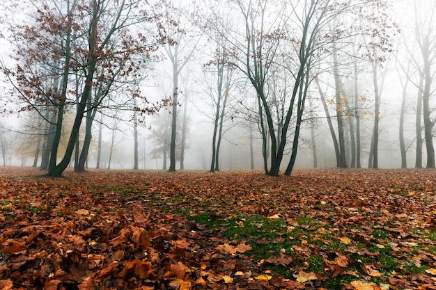 작은 안개 속에서 가을 시즌에 공원에서 자라는 나무, 단풍 나무 잎이 땅에 떨어지고 식물의 어두운 줄기, 안개로 인해 가시성이 낮습니다.