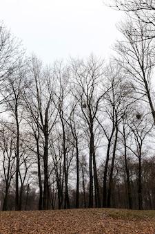 Деревья, растущие в парке в осенний сезон.