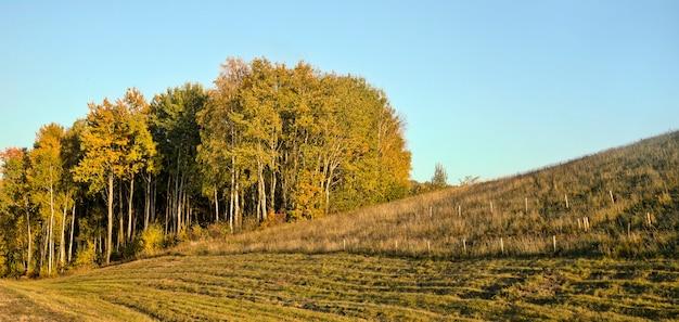 Деревья, растущие на холме в осенний сезон