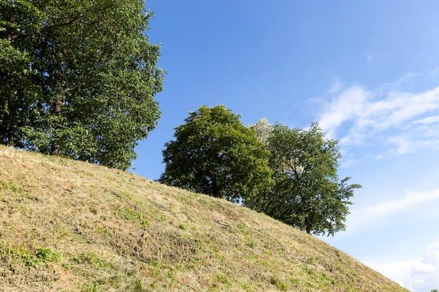 緑の葉のある丘の上に生えている木々、植物や木々のある丘陵地帯の夏の時間