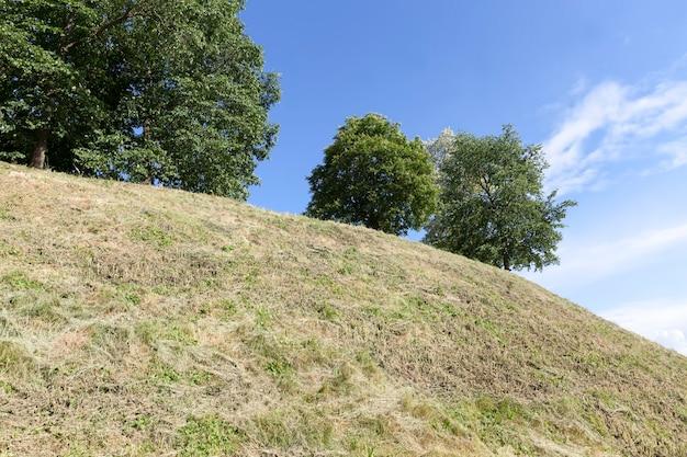 緑の葉のある丘の上に生えている木