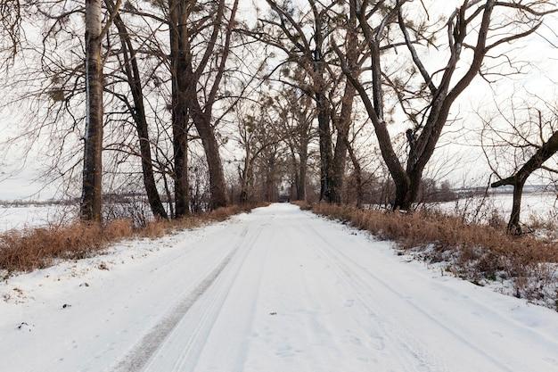 冬の道端に生える木々