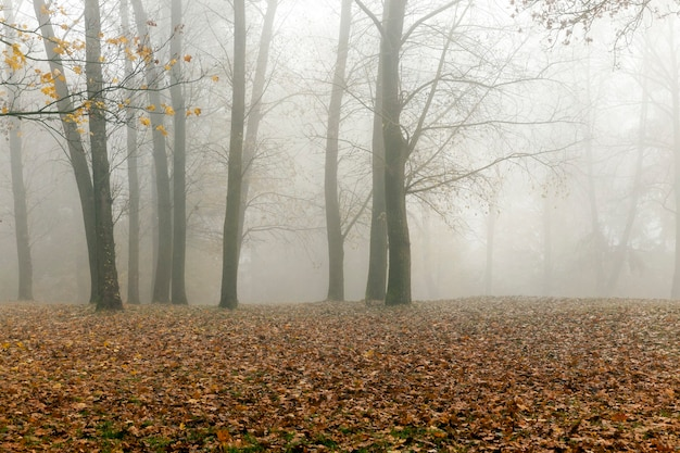 The trees growing in the park in autumn season in a small fog