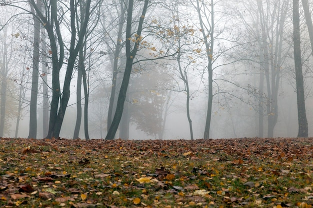 Trees growing in the park, graphed in the autumn season, morning and fog