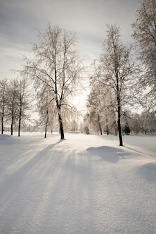 The trees growing in park in a winter season the sun is behind clouds behind trees