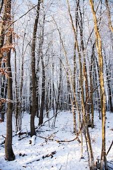 Trees growing in the wood in a winter season