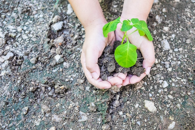 Trees in hand, the idea of ​​planting trees and loving nature