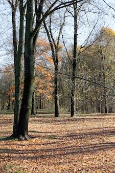 木はほとんど落ち葉を持っています