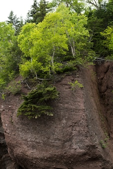 Trees at hopewell rocks, bay of fundy, new brunswick, canada