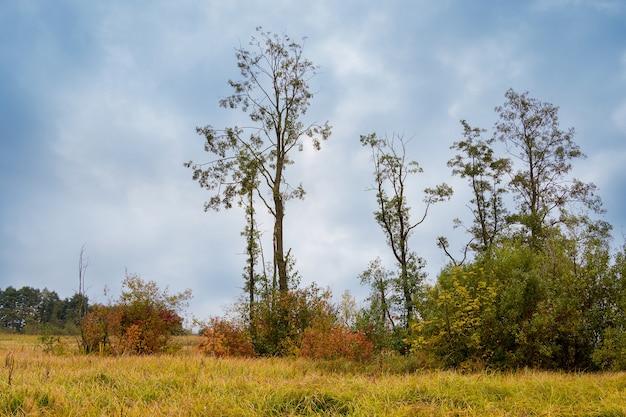 曇った劇的な秋の空を背景に厚い草に囲まれた野原の木々