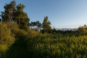 Trees in a field, Lake Audy Campground, Riding Mountain National Park, Manitoba, Canada