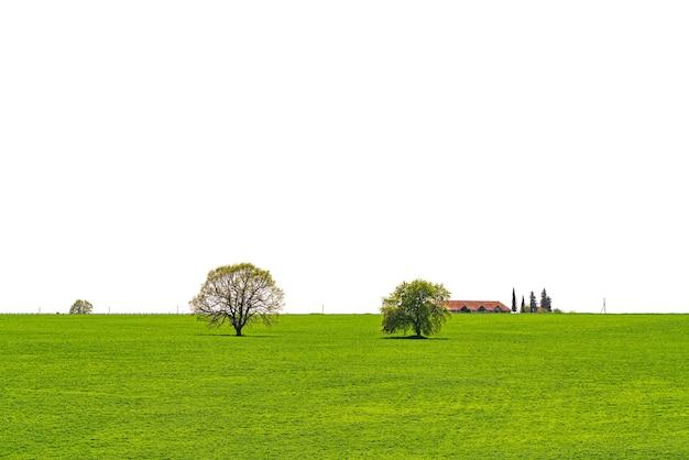 白で隔離される緑の野原の木