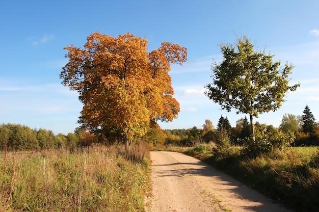 Деревья в дороге