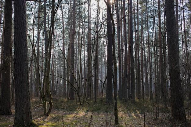 葉のない春の森の木々