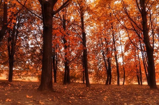 秋の都市公園の木
