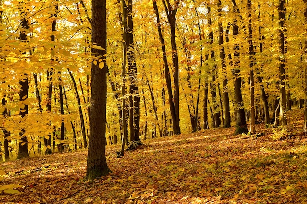 «деревья в осеннем лесу»