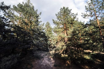 Trees in beautiful forest