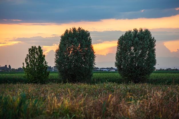 일몰 시간에 시골 풍경 세부의 나무