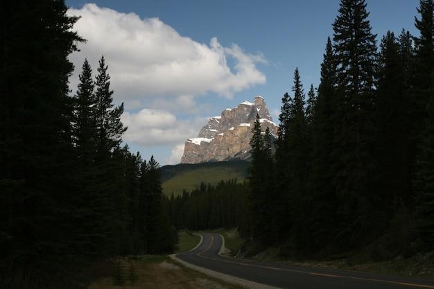 バンフ国立公園とジャスパー国立公園の崖の前の木々