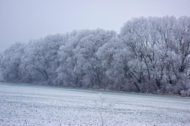 늦었다에 나무입니다. 겨울 나무입니다.