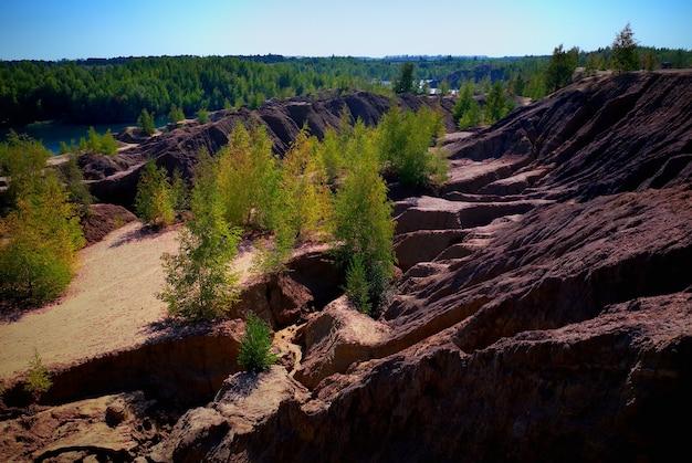 砂の劇的な風景の背景の木