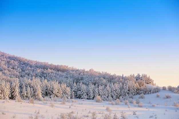 Деревья в снегу зимой на фоне голубого неба на закате