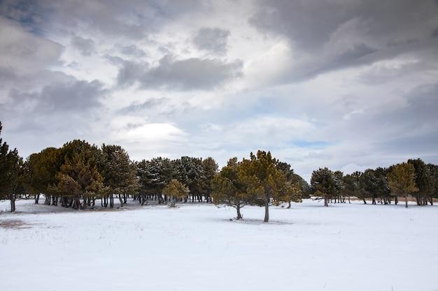 Деревья в снежном пейзаже на закате