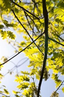 夏の風景の木