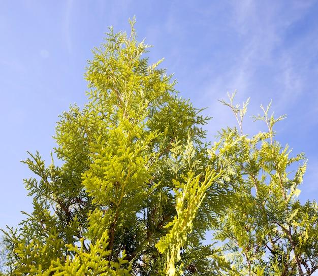 Деревья летом