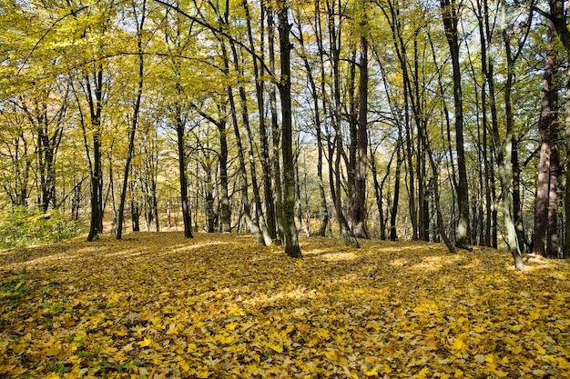 森の中の秋の木々