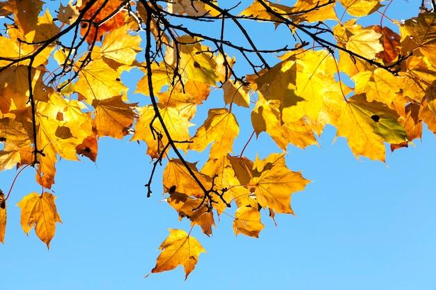 秋の木々。写真のクローズアップ。