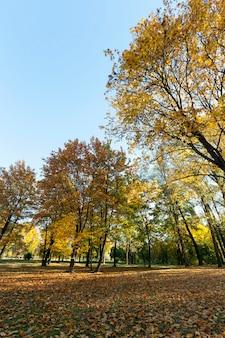 秋の木々。