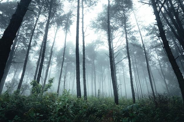 霧の中の木々、松の木のある荒野の風景の森 Premium写真