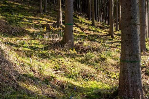 昼間の森や草の木々