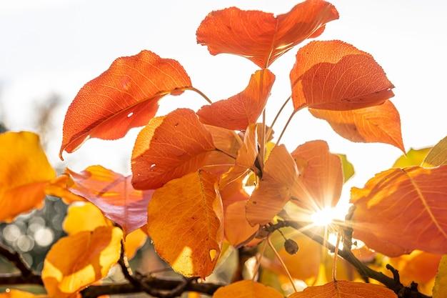 秋の日没時の森の木々
