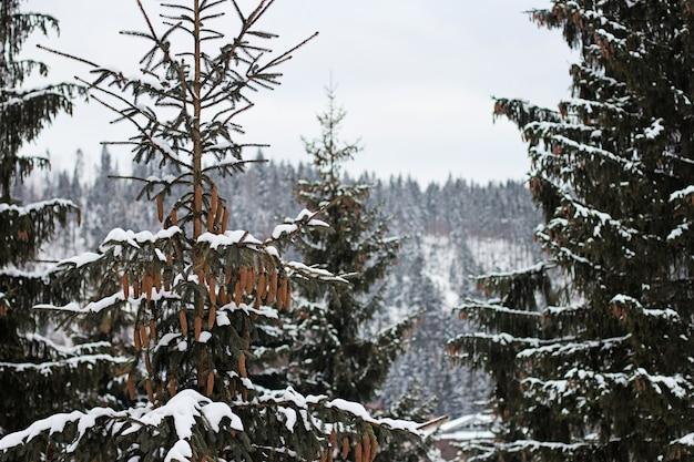 Деревья в лесу, покрытые снегом зимой