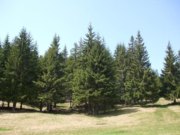 緑の野原に生えている森の木々