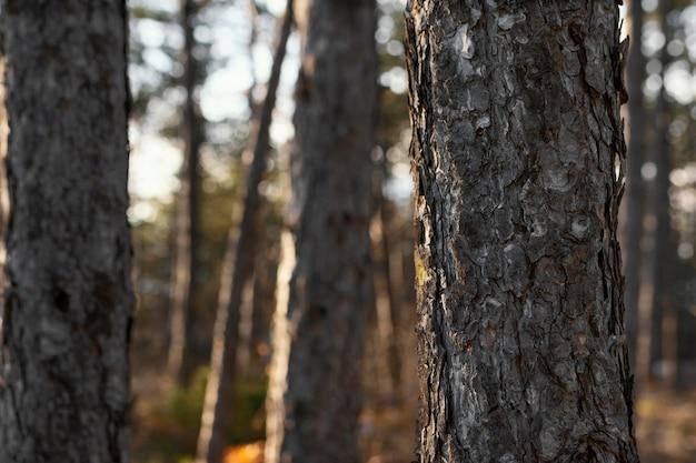 コピースペースのある日光の下で森の木々