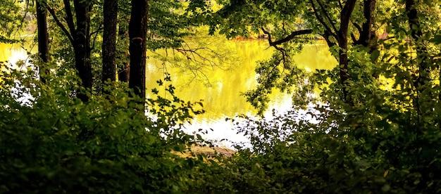 晴れた日の初秋の川の近くの森の木々、パノラマ